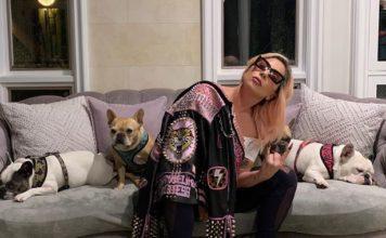 Lady Gaga, σκυλιά