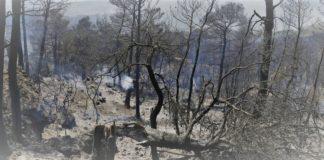 καμένες εκτάσεις, φωτιές, πυρκαγιές